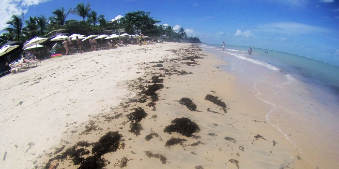 Praias lindas, mas com muita alga.
