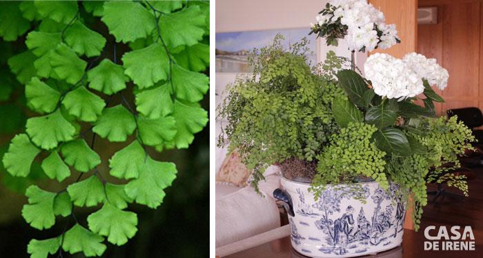 Folhagem para interiores planta de folhagem de rvores for Jacinto planta interior