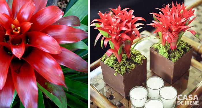 20 plantas que vivem dentro de casa casa de irene for Plantas interior sin luz