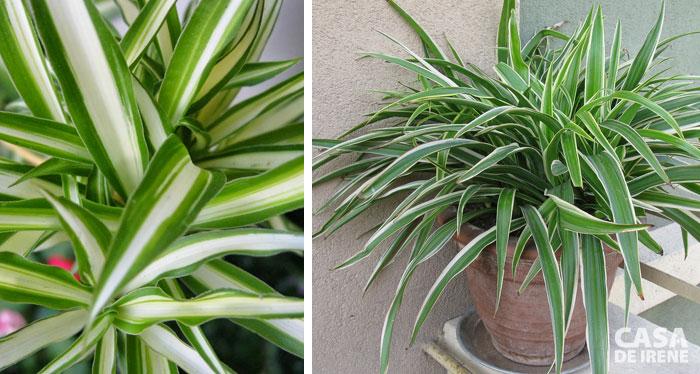 20 plantas que vivem dentro de casa casa de irene - Plantas pequenas de interior ...