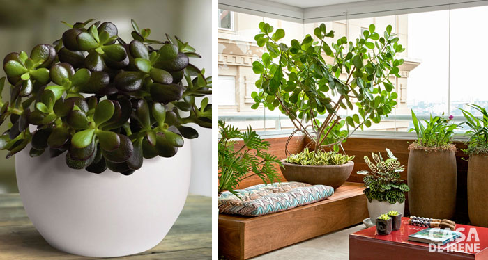 20 plantas que vivem dentro de casa casa de irene - Plantas bonitas de interior ...