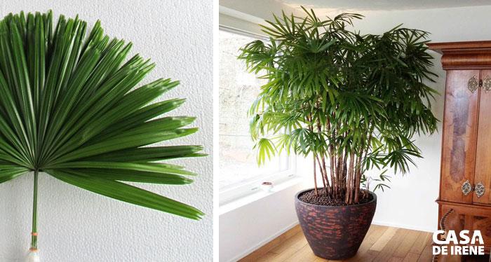 20 plantas que vivem dentro de casa casa de irene - Plantas grandes para interiores ...