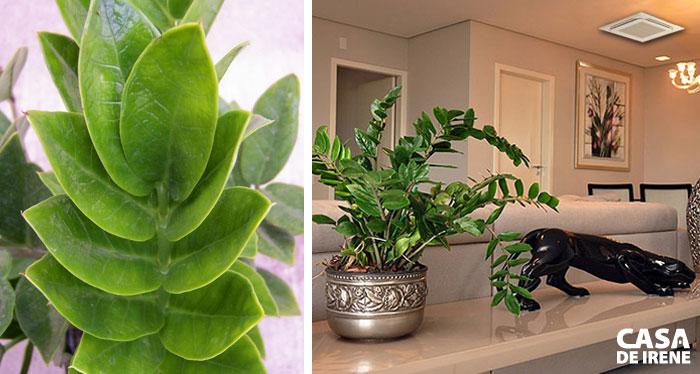 20 plantas que vivem dentro de casa casa de irene - Estanteria para plantas de interior ...