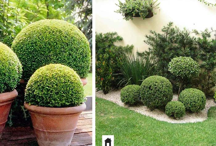 25 plantas resistentes ao sol casa de irene for Plantas decorativas tipos