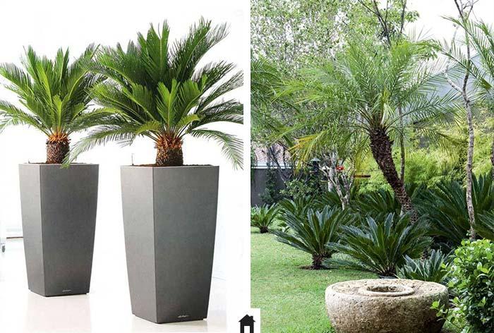 25 plantas resistentes ao sol casa de irene - Tipos de plantas de exterior ...