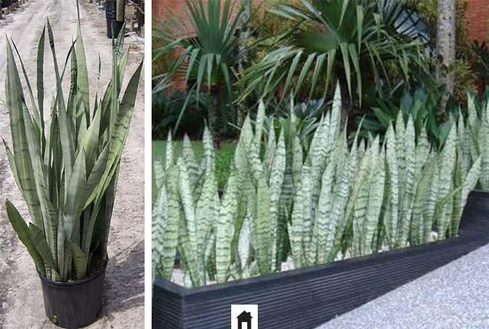 25 plantas resistentes ao sol casa de irene - Plantas muy resistentes ...