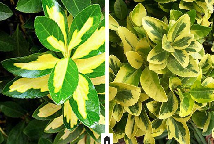 25 plantas resistentes ao sol casa de irene for Plantas exterior sol