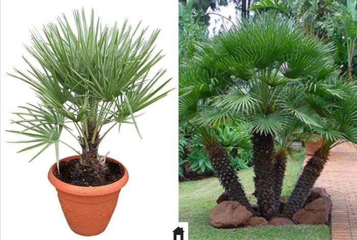 25 plantas resistentes ao sol casa de irene for Plantas decorativas resistentes