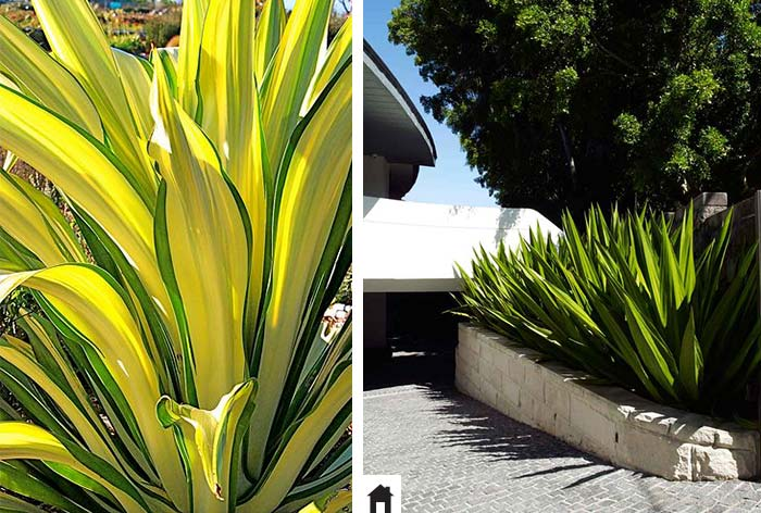 25 plantas resistentes ao sol casa de irene for Plantas baratas de exterior